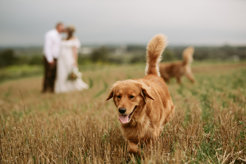 backyard wedding,ontario elopement