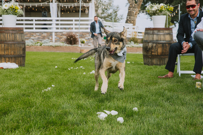 wedding dog,dogs in weddings