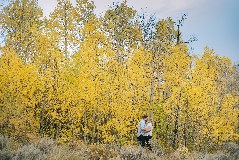 changing aspens, colorado fall photos